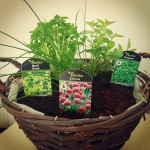 #urban #gardener #enjoywork #friday #event #chiswickbusinesspark #chiswick #london #herbs #madebyme