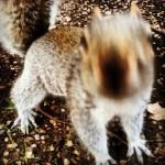 The #crazy #squirrel !!! Please don't move! #kyotogarden #hollandpark #highstreetkensington #london #londra #scoiattolo #photosofengland