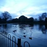 Afternoon walk in Gunnersbury Park 25 Dec #afternoon #walk #gunnersburypark #roundpond #ducks #nofilter #lake #london #londra #christmasday #water #winter #blue #bluesky #christmas
