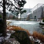 #snow #snowing #ice #iced #cold #lake #chiswickbusinesspark #chiswick #park #london #londra #londonlife #winter #winterlong #england #uk