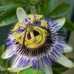 #chiswick #unidentified #flower @lucaeffe_ any ideas?